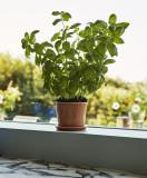 Hay Botanical Family bloempot set L