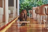MiaCara Desco hondenvoerbak medium
