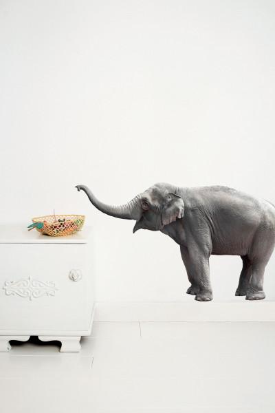 KEK Amsterdam Safari Friends Elephant muursticker