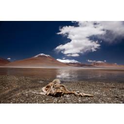 Get Art Flamingo muerto kunstfotografie
