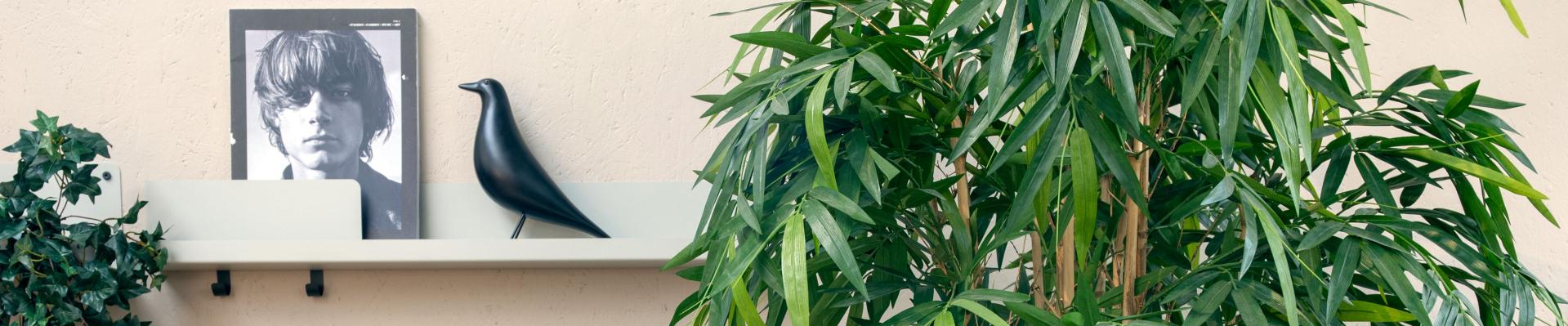 Designplants Bamboe