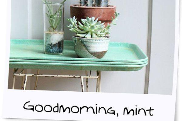 Snapshot: Mogguh... Mint!
